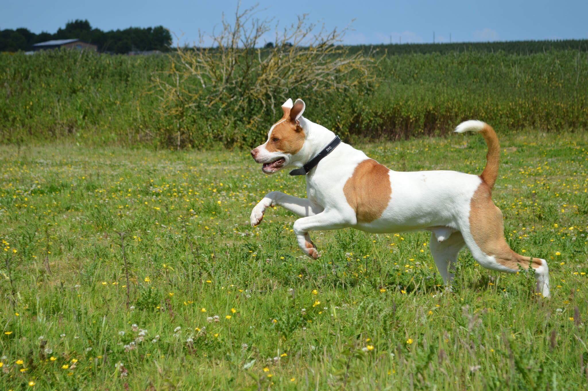 Happy Dog In Field
