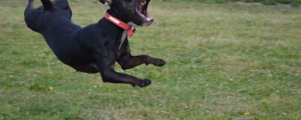 Dog In Mid Air
